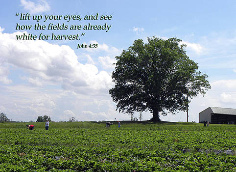 The Harvest by Sandi OReilly