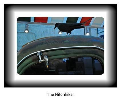 Daryl Macintyre - The Hitchhiker