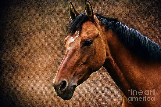 Angela Doelling AD DESIGN Photo and PhotoArt - The horse portrait