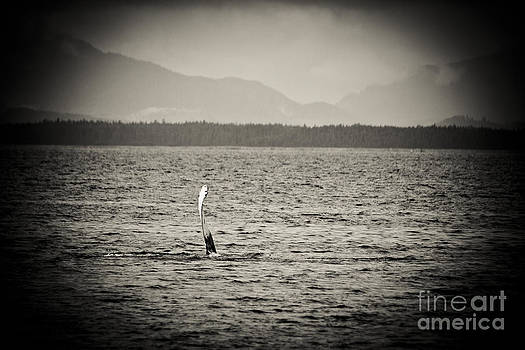 Darcy Michaelchuk - The Humpback Wave Sepia
