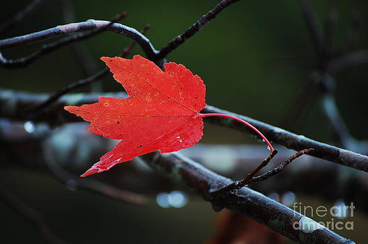 The Last Red Leaf by Robert Meanor