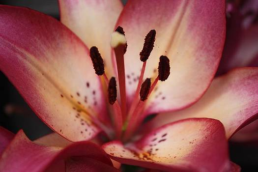 The Lily by Bella  Shots