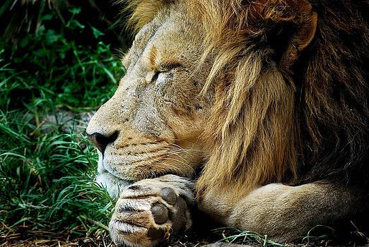 Michelle Wrighton - The Lions Sleeps