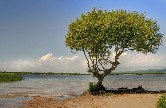 Julie L Hoddinott - The Lone Tree of Kenfig