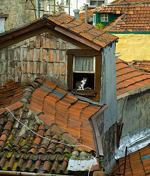 The Lord of the Roofs by Dias Dos Reis
