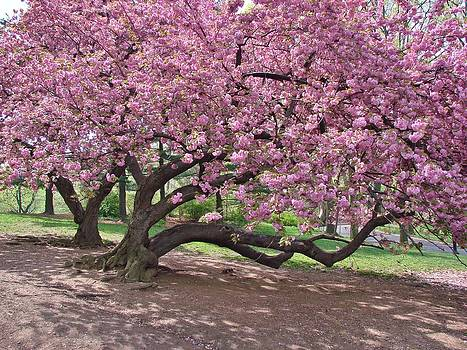 the cherry orchard symbolism essay Learn essay writing from sample essays democracy and dictatorship war on terrorism themes and important topics in the cherry orchard by anton chekhov.
