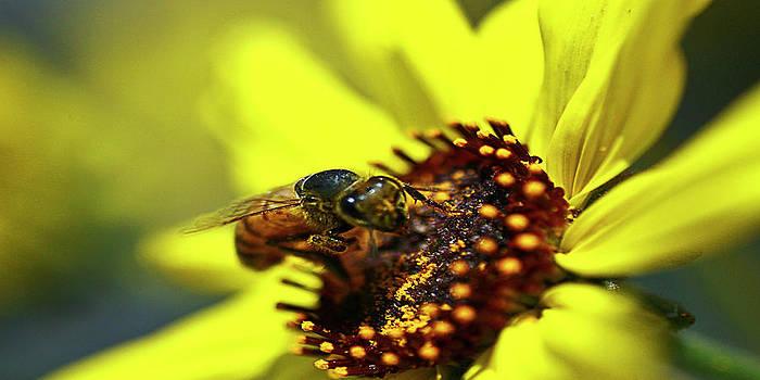Gilbert Artiaga - The Nectar
