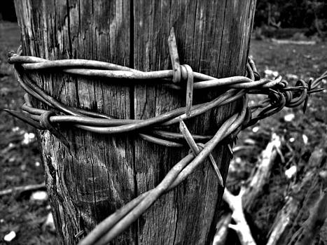 The old fence post by Victor Rodriguez
