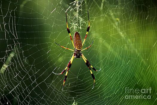 The Orb Weaver by Theresa Willingham