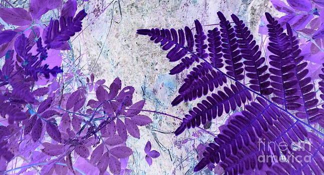 Sue Wild Rose - The Passion Of Purple