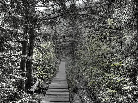 The Path  by Nilanjan Chaks