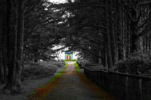 The Path to Light by Andrew Ripley