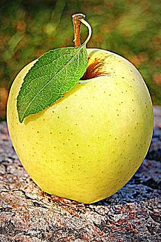 The Perfect Apple by Amy Schauland