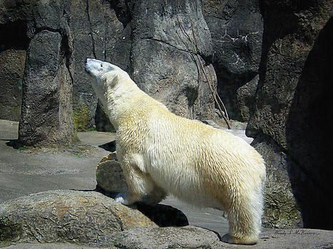 The Polar Pose by Wendy McKennon