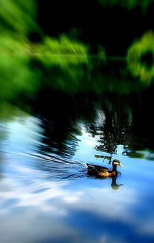The Pond - Central Park Nyc by Maria Scarfone