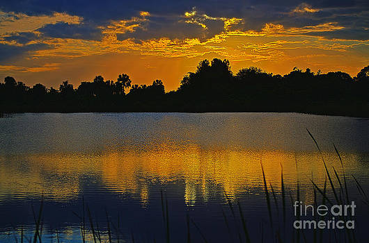 The Pond by Lawrence Ott