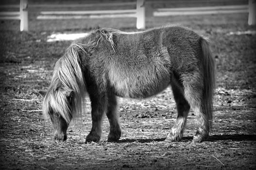 The Pony by Kate Holloman