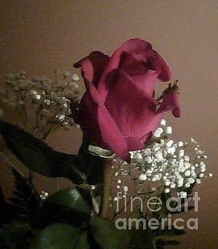 Sue Wild Rose - The Rose