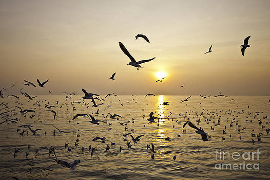 The seagull and seascape by Wittaya Uengsuwanpanich