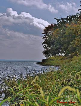 The Shoreline by Dwayne Cain
