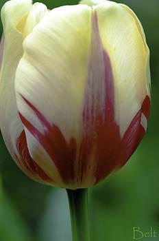 Christine Belt - The Softness of Spring