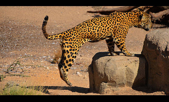 The Spotted Cat by Farah Faizal
