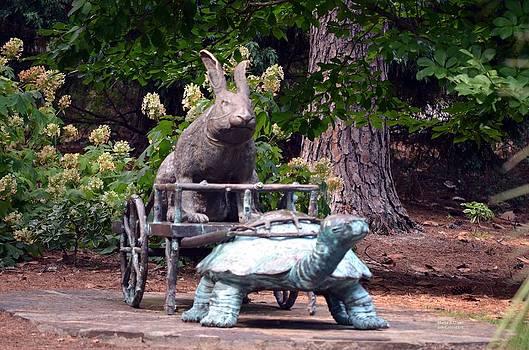 Maria Urso  - The Tortoise and the Hare