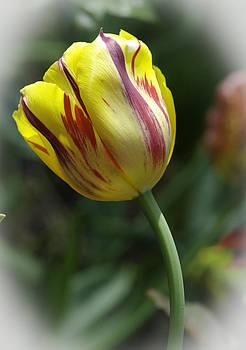 Christine Belt - The Tulip Dance