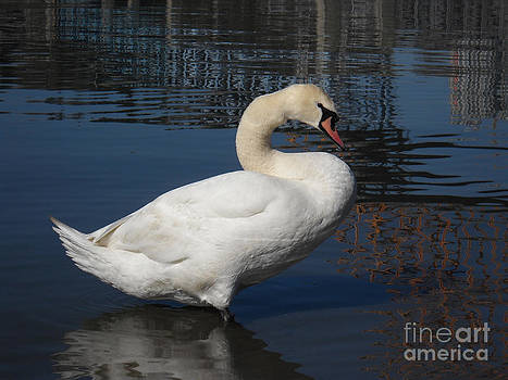 The Ugly Duckling by Chris Murphy Elliott
