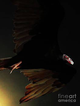 Wingsdomain Art and Photography - The Vulture