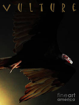 Wingsdomain Art and Photography - The Vulture . with text