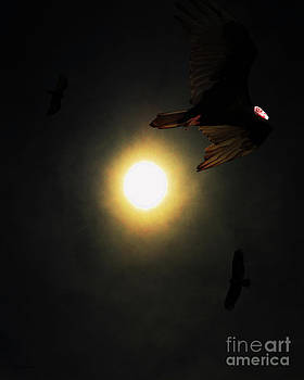 Wingsdomain Art and Photography - The Vultures Have Gathered In My Dreams . Portrait Cut