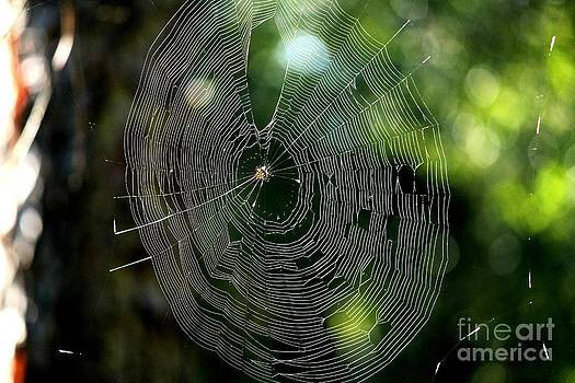 The Web by Theresa Willingham