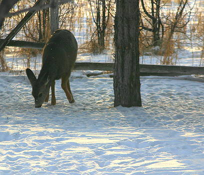The Yearling by Laurie Penrod
