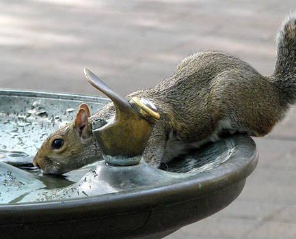 Thirsty Fella by Sheila Rodgers