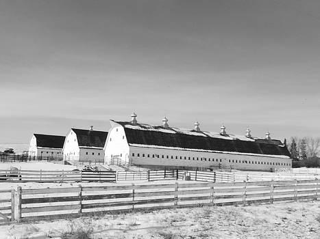 Three Barns  by Tricia  Mccoo