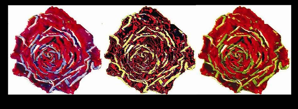 three colors of roses I by Branko Jovanovic