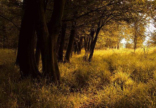 Bogdan M Nicolae - Through Enchanted Forest