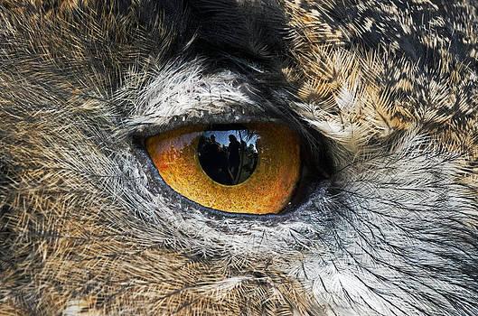 Through wise eyes by Cheryl Cencich