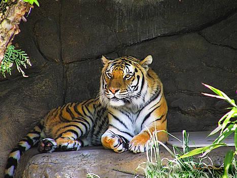 Tiger Life by Wendy McKennon