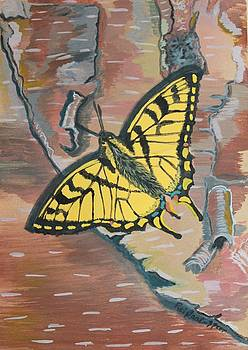 Tiger Swallowtail by Amy Reisland-Speer