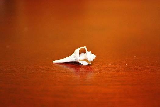 Tiny Shell by Tanya Moody