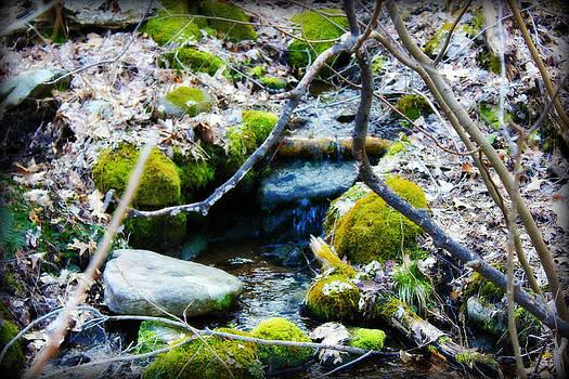 Tiny stream by Melissa Richter