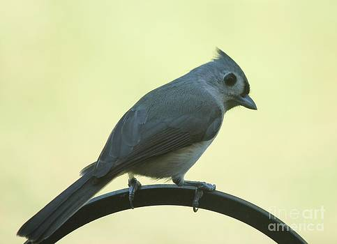 Titmouse on a Perch by Theresa Willingham