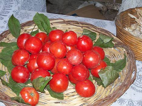 Tomatoes and Leaves by Sandy Collier