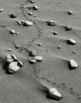 Tracks And Rocks by Brady D Hebert
