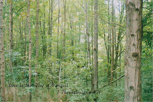 Tranquil Woods by Terrilee Walton-Smith