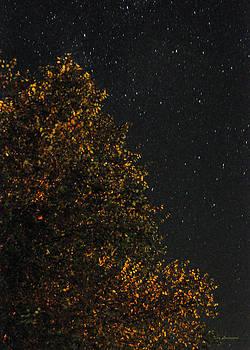 Kay Lovingood - Tree and Stars