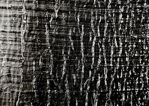 Charmian Vistaunet - Tree Bark