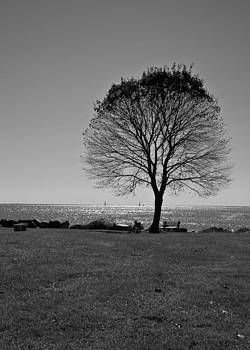 Tree by the Sea in BW by Edward Myers